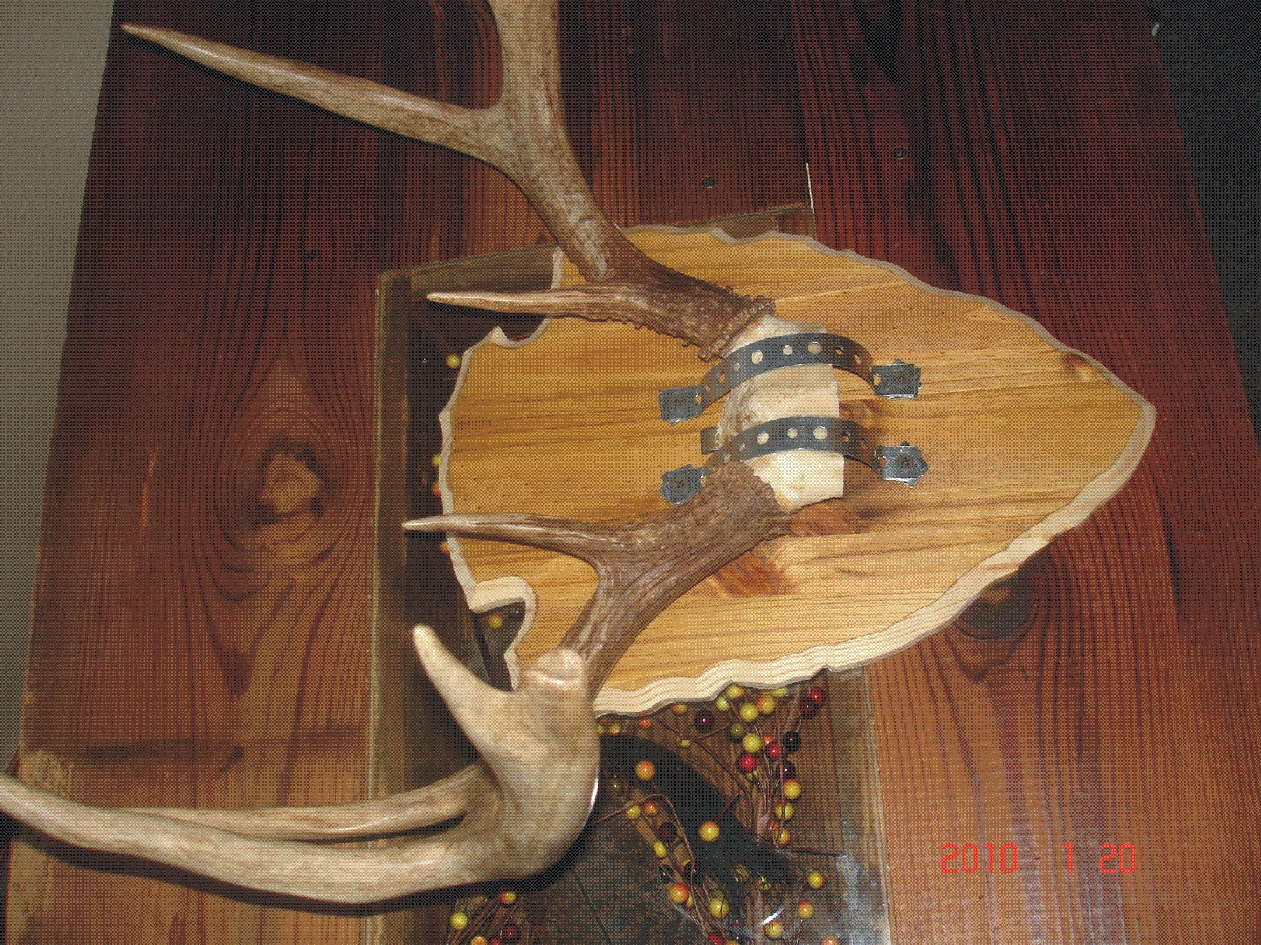 Antler plaque do it yourself hunter by design back to top solutioingenieria Images