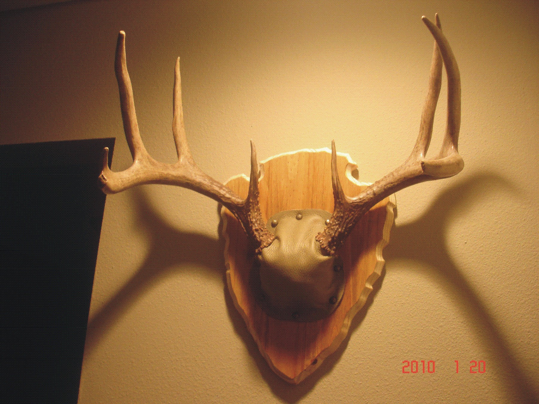 Antler plaque do it yourself hunter by design for Arrowhead plaque template
